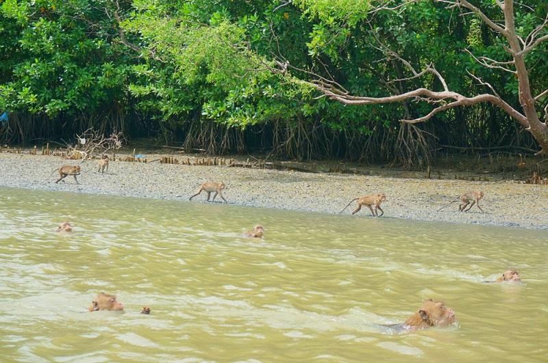 Überall um die Tempel, in den Wäldern und auch auf den Straßen der Dörfer leben Makaken Affen. (#04)