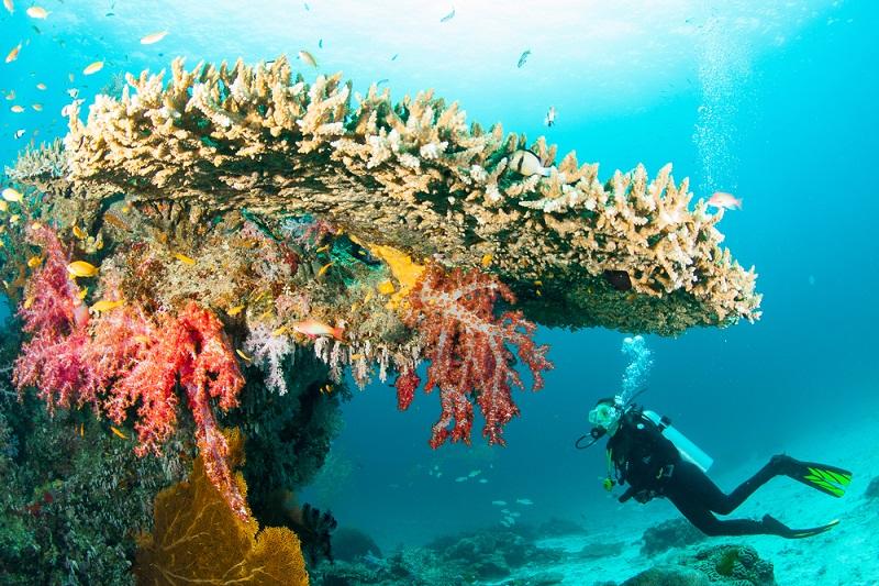Beim Tauchen vor den Similan Inseln gibt es etliche Geheimnisse und Lebewesen zu entdecken. (#01)